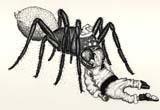 spider_eats_santa